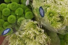 green poms