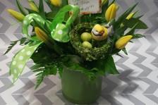 Birds nest tulips